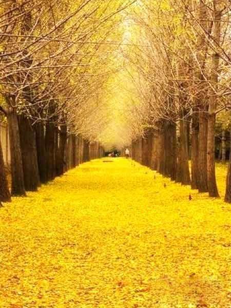 上海周邊人少環境好的地方  美景不止很遠才有2