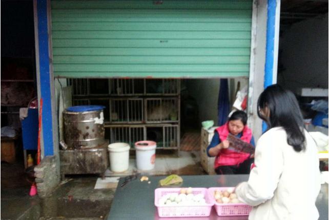 厦门重点关注H7N9原因1