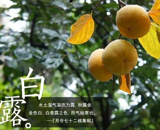 5065,白露白迷稻棉秀(原创) - 春风化雨 - 诗人-春风化雨的博客
