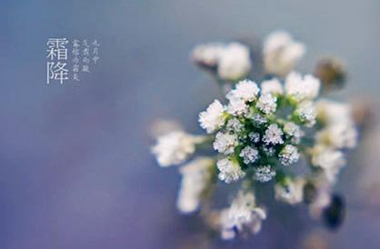 霜降的诗句