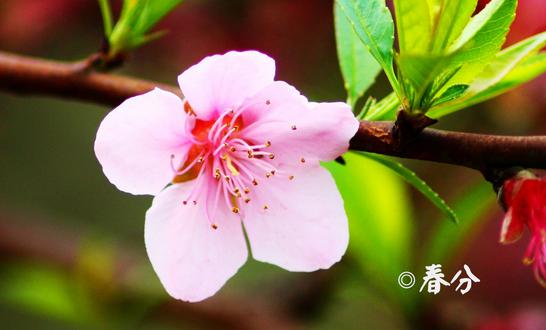 春分节气有什么特别的