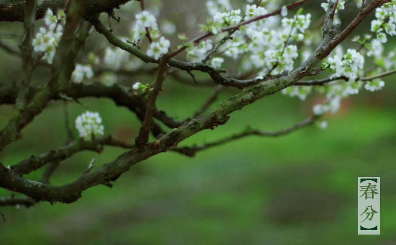 春分时节怎么养生