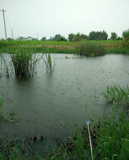 雨水节气钓鱼的技巧是什么