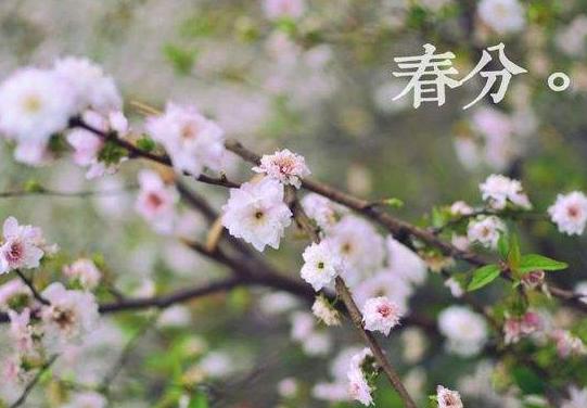 春分养生注意什么