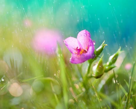 谷雨的习俗有什么