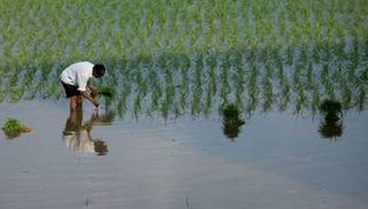 關于小暑節氣的農事