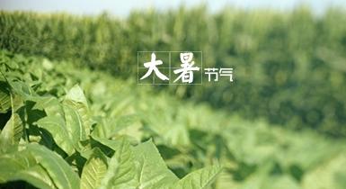关于大暑节气的农事
