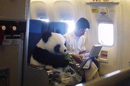 首次乘坐飞机注意事项