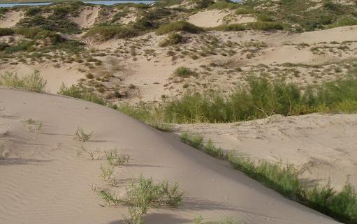 2017年6.17防治荒漠化和干旱世界日主题是什么1