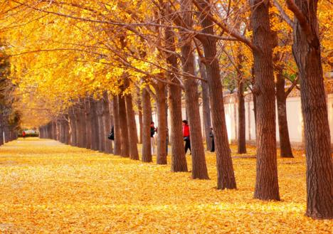 关于秋天的图片(共8篇)