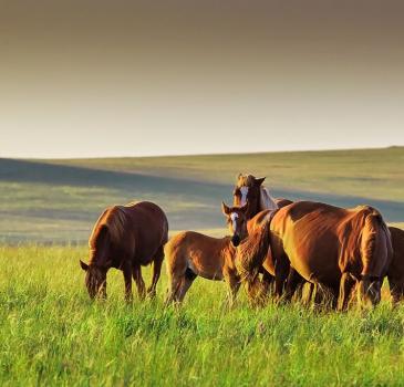 【走进边境】呼伦贝尔大草原+根河湿地+蒙古包2天1晚