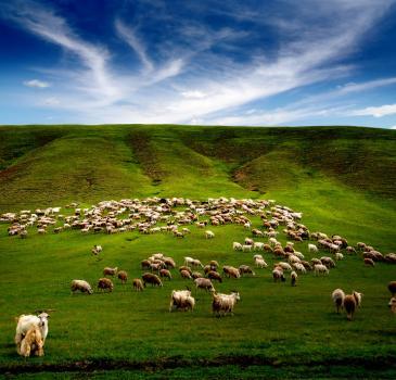 【北环线A版】草原+湿地+莫尔道嘎+临江+满洲里4天3晚