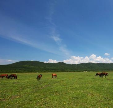 【北环线C版】草原+黑山头+满洲里+边防线4天3晚
